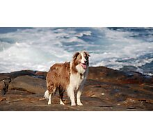 Happy Pooch Photographic Print