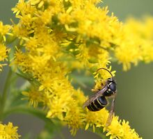 Two Harbors, MN: Bee and Goldenrod by ACImaging