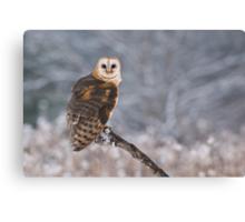 Barn Owl Hunting Canvas Print