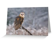 Barn Owl Hunting Greeting Card