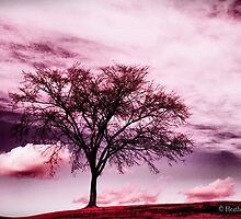 Enlighten by Heather King