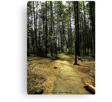 Kootenai Falls Trail Canvas Print