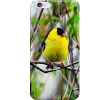 YELLOW MALE GOLDFINCH PICTURE-PILLOW AND VARIOUS APPAREL iPhone Case/Skin