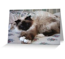 Cassie *~ Greeting Card