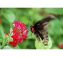 Butterfly 4 Photographic Print