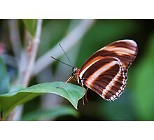 Butterfly 5 Photographic Print