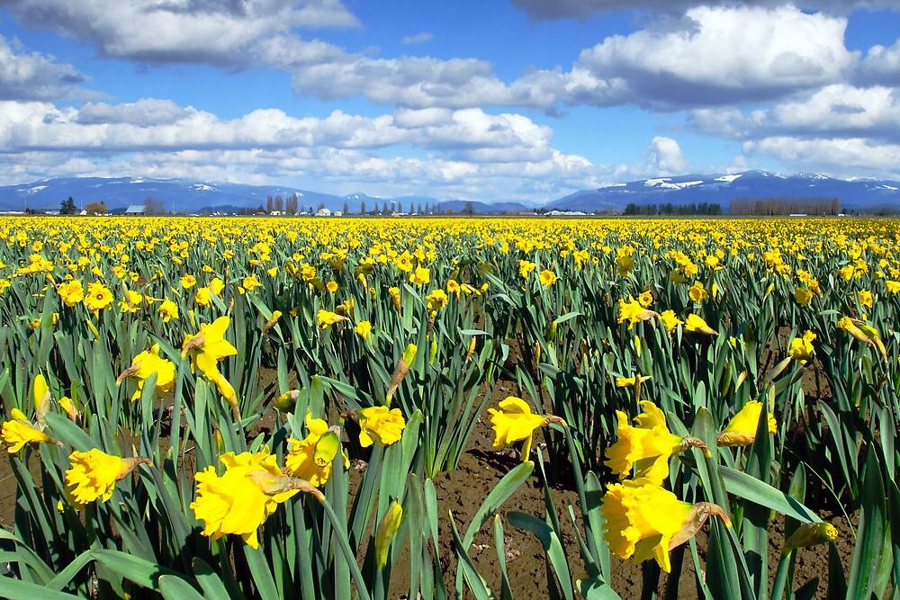 Spring time by Dan Mihai