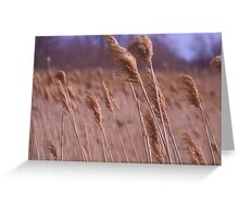 Marsh Pit Greeting Card