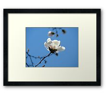 Blue Sky Floral art White Magnolia Flowering Tree Spring Baslee Framed Print
