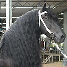 Proud Friesian - Dennis by louisegreen