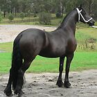 Friesian Filly  by louisegreen