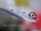A Daisy Refraction For Mom,  Mother's Day Card by Shelly Harris