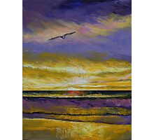 Seagull Sunset Photographic Print