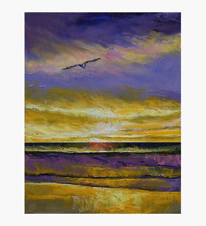 Seagull Sunset Photographic Print