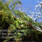 snowy Oregon ferns in trees with haiku by PoemsProseArt