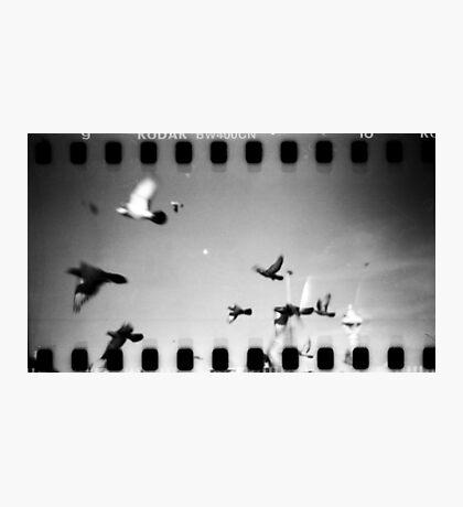 pigeons, phnom penh, cambodia Photographic Print