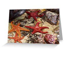 Star Fish,Great Ocean Road,Australia. Greeting Card