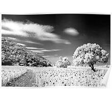 Sun Flower Plantation Poster
