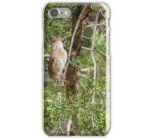 House wren sits on a cedar branch iPhone Case/Skin