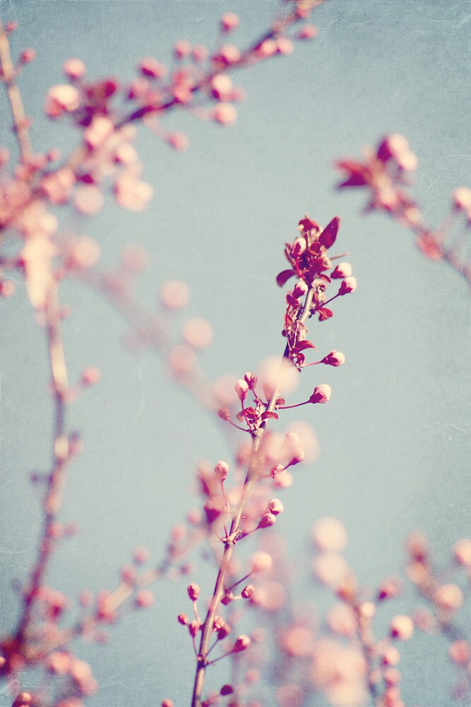 Spring by marziafrank