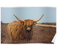 Highland Hair Do Poster