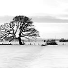 Tree in Snow Winter 2010 by Steve Ashton