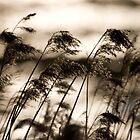 Sepia Dawn by Steve Ashton
