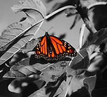 Butterfly Of Colour by Keith Arends