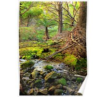 Mountain Stream - Flinders Island Poster