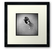 Fetch the ball Framed Print