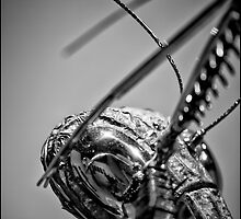 Praying Mantis by Adriano Carrideo
