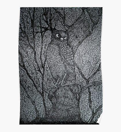 Sharp Shinned Hawk Poster