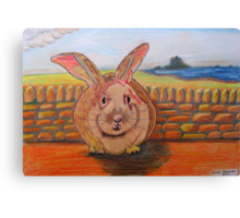 331 - LINDISFARNE BUNNY - DAVE EDWARDS - COLOURED PENCILS - 2011 Canvas Print