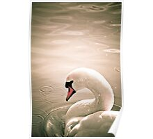 Swan in a lake Poster