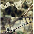 Spring - Catkins by Sybille Sterk