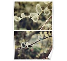 Spring - Catkins Poster