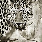 Leopard in Sepia by starbucksgirl26