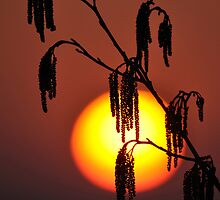 Catkins by ned1301