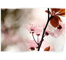 Blossom Pink Poster
