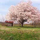 Countryside Beauty by Charldia