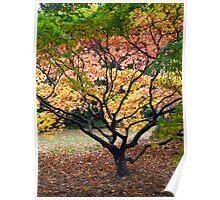 The Acer Glade - Westonbirt Arboretum Poster
