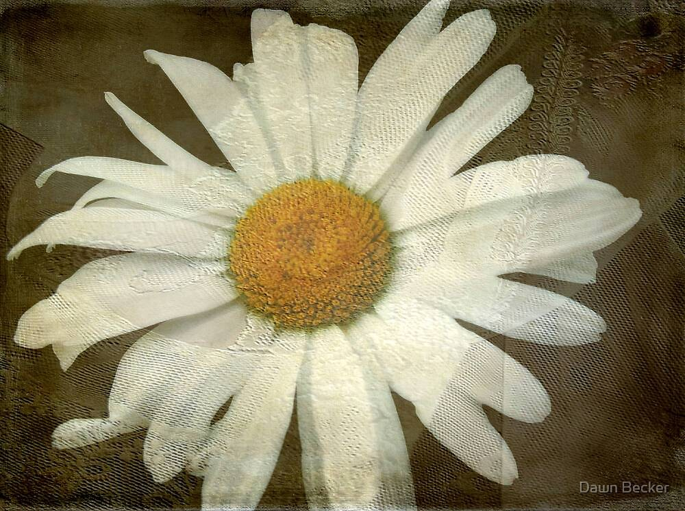 Springing Up Daisies © by Dawn M. Becker