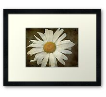 Springing Up Daisies © Framed Print