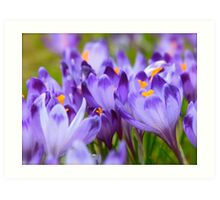 Less is more . Polish Spring -  Crocus Sativus/Safran. by Brown Sugar . Views: 1143 .Thanks Friends !!! Art Print