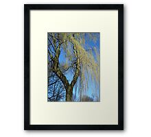 Weeping willow Framed Print
