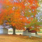 Fall Colors Bright by carolinagirl10