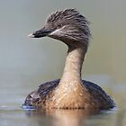 Australian Waterbirds - Simon Bennett by Simon Bennett