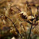 Dry warm flower by contradirony