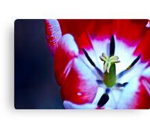 A Tulip's Smile Canvas Print