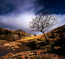 Dales Sunshine by Jeanie